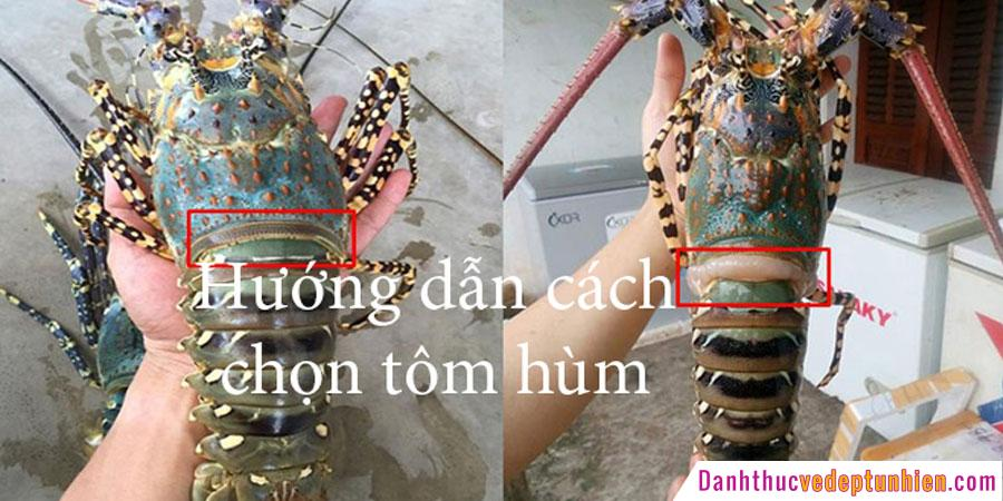 cach chom tom hum tuoi song